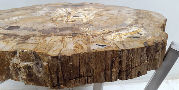 natural petrified wood furniture