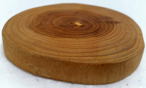 tree solid wooden slice