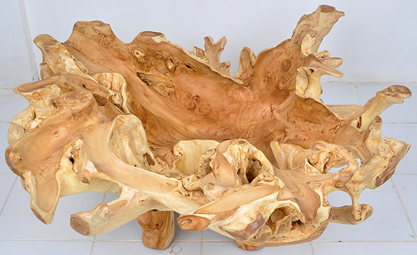 natural teak root table coffee table