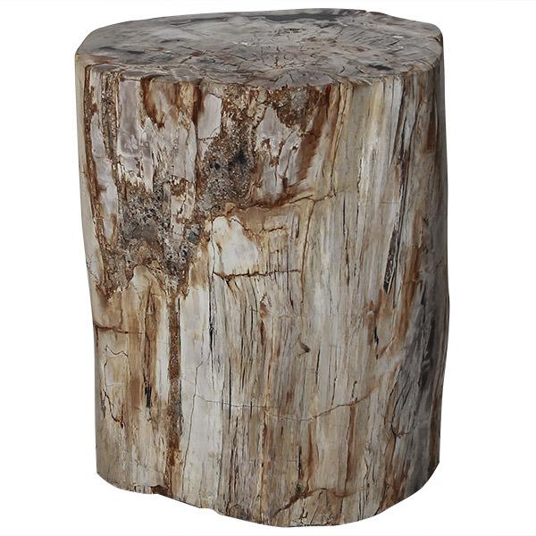 fossil stool